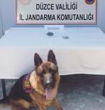 Kontrol Edilen Yolcunun Ayakkabısının Altındaki Uyuşturucuyu Dedektör Köpeği Buldu