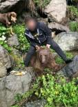 Yavru Boz Ayıyı Vuran Şahsa 30 Bin 608 TL Para Cezası