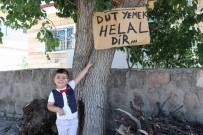 Ağaçtaki Dutları Yemek İsteyen Vatandaşlara Not Bıraktı