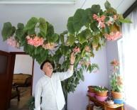 Eşinin Hatırasını Yaşatmak İçin Gözü Gibi Baktığı Çiçek Bütün Odayı Kapladı