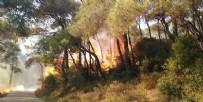 YANGINA MÜDAHALE - Heybeliada'da çıkan orman yangını kontrol altına alındı! 3 kişi gözaltına alındı