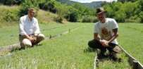 Kazdağları'nda Lavanta Yetiştiriliyor