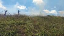 Tuzla'da Ormanlık Alanda Çıkan Yangın Söndürüldü