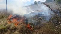 Tuzla'da Otluk Alanda Yangın Çıktı, Çekirgeler Kaldırımı İstila Etti