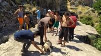 20 Metrelik Sarnıca Düşen Köpek Halatla Kurtarıldı
