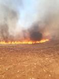 Trafodan Çıkan Yangın 50 Dönümlük Alanı Kül Etti