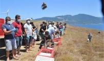 Paşalimanı Adasında 750 Keklik Doğaya Salındı