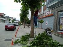Ağaçların Dip Budaması Yapıldı