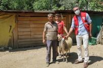 Kızılay'ın Çalışmasını Görünce Koyununu Bağışladı