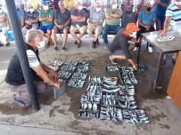 Bu Balıklar Açık Artırma İle Satılıyor