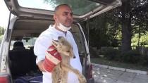 Eskişehir'de Yolda Bitkin Halde Bulunan Tilki, Barınağa Teslim Edildi