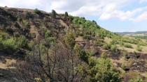 Kastamonu'da Çıkan Örtü Yangını Kontrol Altına Alındı