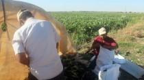 Suyla Bereketlenen Suruç Ovası'nda Üretim De İstihdam Da Arttı