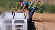 Tunceli'de Bitkin Halde Bulunan Yaban Keçisinin Tedavisi Tamamlandı