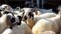 KARIN AĞRISI - Koronavirüs etin üzerinde yaşayabilir mi? Kurban Bayramı'na sayılı günler kala uzman isimden korkutan açıklama