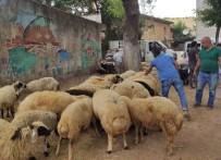 Korona Virüs Kurban Satışlarını Da Vurdu
