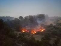 Soma'da Orman Yangını Açıklaması 1 Uçak, 5 Helikopter Havadan Müdahale Ediyor