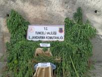 Tunceli'de Uyuşturucu İle Mücadele