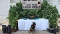 Uyuşturucu Yetiştirdikleri Evi Güvenlik Kameraları Ve Dikenli Tellerle Donatmışlar