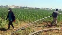 Şanlıurfa'da Tarım İşçileri Bayramda Tarlanın Yolunu Tuttu