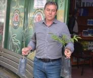 Üreticilere 'Zeytin Kelebeği' Uyarısı