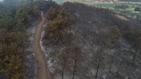Yangının Boyutu Gün Ağırınca Ortaya Çıktı