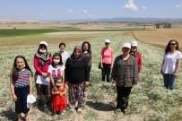 Eskişehir'de Kadın Çiftçiler Odaklı Anason Bitkisi Üretimi