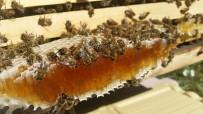 Arıcılar Bu Yılki Bal Hasadından Memnun