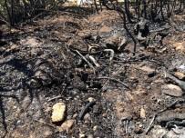 Balıkesir'de Orman Yangını Kısa Sürede Söndürüldü
