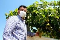 AK Parti'li Milletvekili Akkal, Zarar Gören Bağlarda İncelemelerde Bulundu