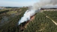 YANGINA MÜDAHALE - İstanbul'da orman yangını!