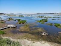 Ladik Gölü'nde Kara Göründü
