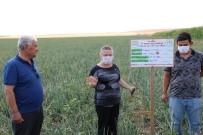 Soğan Üreticileri Yüksek Verim Bekliyor