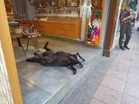 Klima Altında Serinleyen Köpeğin Gülemseten Keyfi