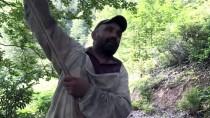 Artvin'in Zengin Doğasında Üretilen Ballar Rağbet Görüyor