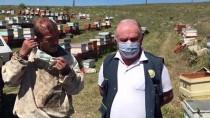 Kırşehir'de 'Bal Ormanı' Lavanta Yetiştiriciliğine İlgiyi Artırdı