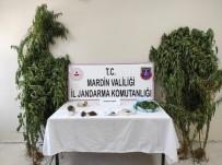 Mardin'de Jandarmadan Kenevir Operasyonu