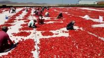 Niğde'de Güneşte Kurutulan Domatesler 6 Ülkeye İhraç Ediliyor