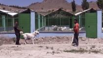 'En İyi Sürü Bekçi Köpeği' Modern Tesiste Yetiştirilecek