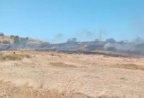 Paşaliman Adasında Zeytinlik Yangını