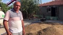 Kaman'da Zirai Hastalık Ve Düzensiz Yağışlar Nohut Üretimini Olumsuz Etkiledi