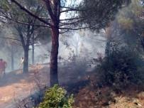 Balıkesir-Susurluk Arasında Çıkan Orman Yangını Korkuttu