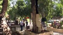 Tarihe Tanıklık Eden Anıt Ağaçlara Özel Bakım