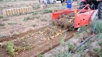 Nevşehir'de 'Patates Hasadı Tarla Günü' Etkinliği Düzenlendi