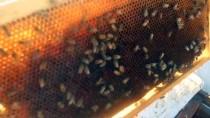 Borç Aldığı Arılarla Başladığı Bal Üretiminde Taleplere Yetişemiyor