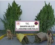 Jandarma Fındık Bahçesinde 10 Kilo 500 Gram Esrar Ele Geçirdi