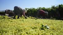 Açıklanan Kuru Üzüm Fiyatı Çiftçileri Ve TARİŞ'i Sevindirdi