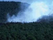 ORMAN YANGINI - Kayışdağı'nda orman yangını!