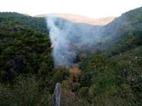 Cide'de Çıkan Orman Yangını Büyümeden Söndürüldü