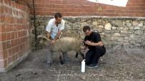 Hayvanlarda Gebelik Kontrolü Artıyor